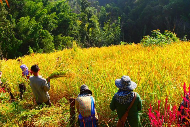 Mosaic landscape in a rotational farming area © Nutdanai Trakansuphakon