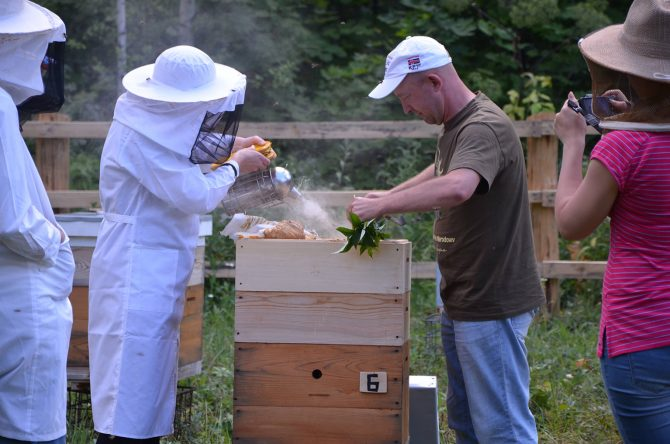 Workshop on the basics of beekeeping: Building a honeycomb foundation and hive, and processes of honey production, pollen storage, and wax building