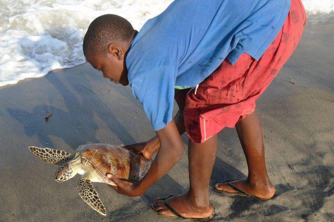 Bycatch turtle release programme