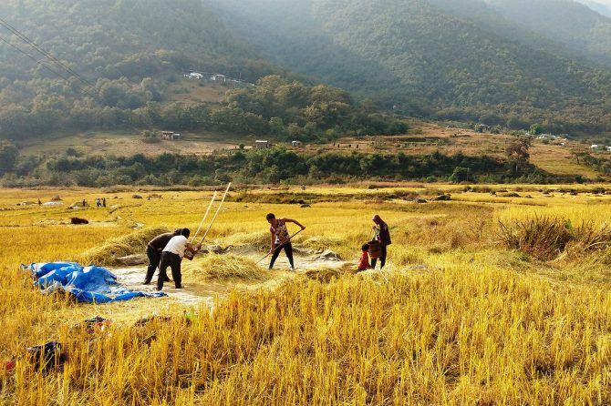 Community engaged in thrashing activity in SEPL of Western Arunachal
