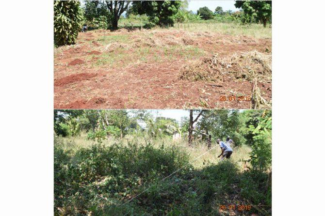 Work has begun on Vetiver Grass Nursery in Kikondo on Lake Victoria