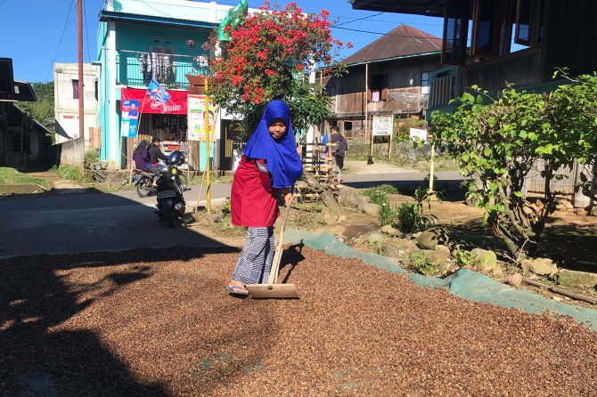A female smallholder dries the coffee cherries in her yard