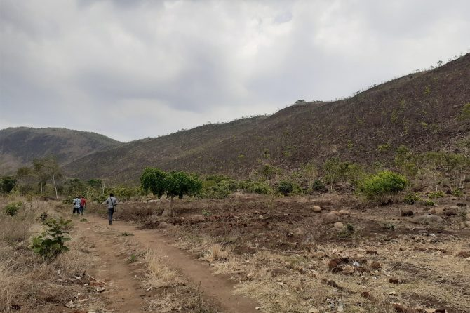A degraded hill-scape with forest regeneration potential – Western side of Michiru I hill in Mandiwa Village, Group Village Headman Chilipa, Traditional Authority Chigaru, Blantyre District, MALAWI