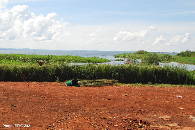 Nature Based Technology: Vetiver grass hedge controls the flow of sediment and pollution in Lake Victoria at Wanyange landing site in Uganda