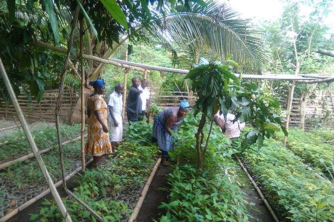Farmers working in the established nursery