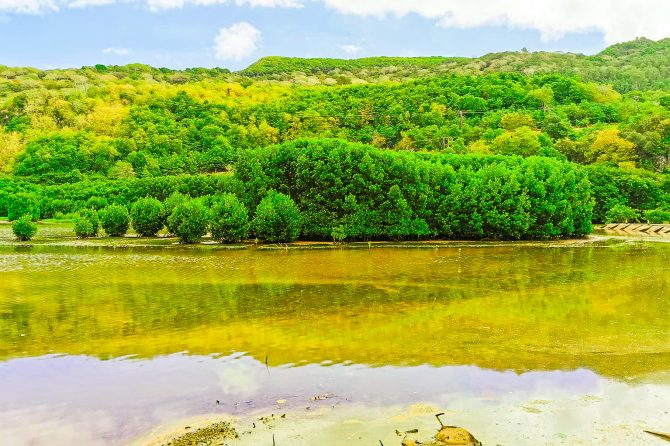Mangrove forest in the project site in the 'Riviere du cap'