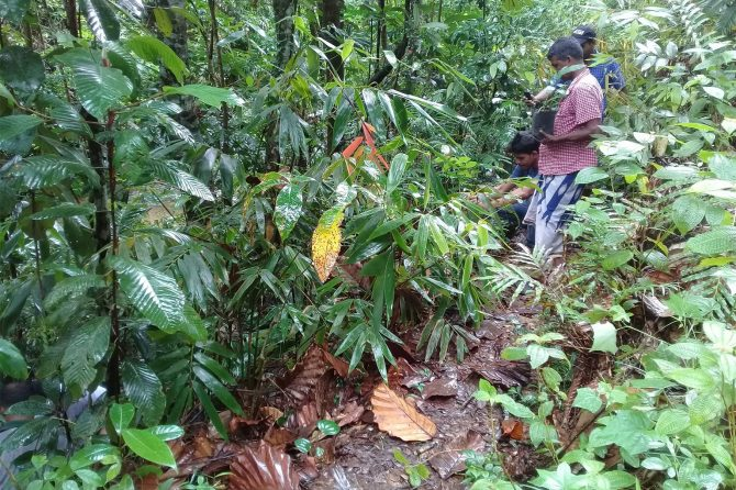 Kandyan Forest home gardens in Kandy district where diverse species are grown